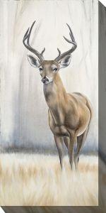 8 Point Deer